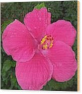 Bright Pink Hibiscus Wood Print