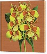 Orchid Vintage Print On Tinted Paperboard Wood Print