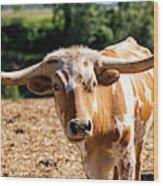 Longhorn Bull In The Paddock Wood Print