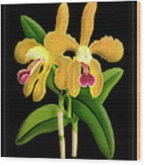 Vintage Orchid Print On Black Paperboard Wood Print