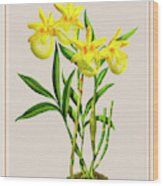 Orchid Vintage Print On Colored Paperboard Wood Print