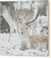 Beautiful Image Of Fallow Deer In Snow Winter Landscape In Heavy Wood Print