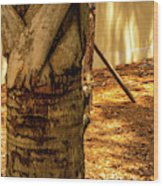 Branch To Branch Wood Print