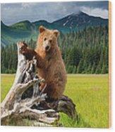 Brown Bear, Lake Clark National Park Wood Print