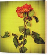 Dying Flower Against A Yellow Background Wood Print