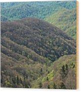 Early Spring, North Carolina Wood Print