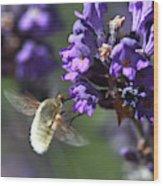 Fly Bee Wood Print