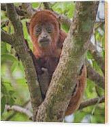 Juvenile Red Howler Monkey La Palmita Casanare Colombia Wood Print