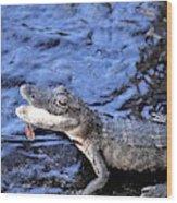Little Gator Wood Print