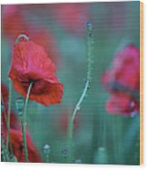 Red Corn Poppy Flowers Wood Print