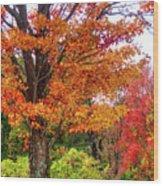 Sagamore Hill Wood Print