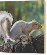 Squirrel Friend Wood Print