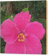 Bright Pink Hibiscus Wood Print