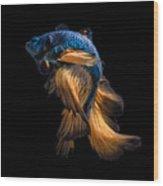 Colourful Betta Fish,siamese Fighting Wood Print