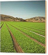Crops Grow On Fertile Farm Land Wood Print