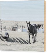 3 Mules Wood Print