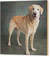 Portrait Of A Labrador Mixed Dog Wood Print