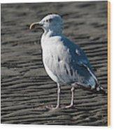 Seagull On Beach Wood Print