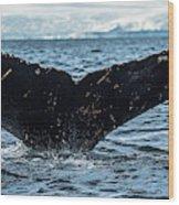Whale In The Ocean, Southern Ocean Wood Print