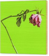 Dying Flower Against A Green Background Wood Print
