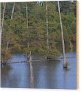 Tennesse Cypress In Wetland  Wood Print