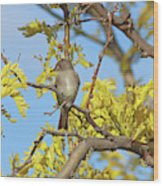 Willow Flycatcher Wood Print