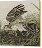 Winter Hawk  Wood Print