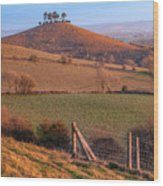 Colmers Hill - England Wood Print