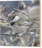 Mountain Chickadee Wood Print