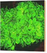 Natural Occurring Fluorescence Wood Print