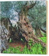 Old Olive Tree Wood Print