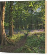 Stunning Bluebell Forest Landscape Image In Soft Sunlight In Spr Wood Print