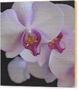 7195-orchids Wood Print