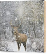 Beautiful Red Deer Stag In Snow Covered Festive Season Winter Fo Wood Print