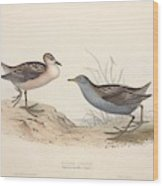 Different Types Of Birds Illustrated By Charles Dessalines D Orbigny 1806-1876 21 Wood Print