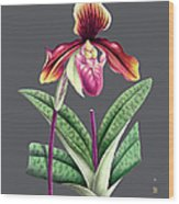 Orchid Old Print Wood Print