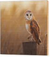 A Beautiful Barn Owl Perched On A Tree Wood Print