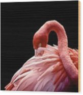 A Beautiful Flamingo Cleaning Its Wood Print