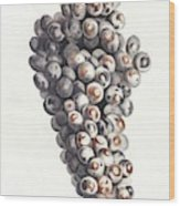 A Bunch Of Grapes By Johan Teyler  1648-1709  Wood Print