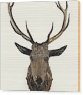 A Carved Wooden Red Deer Trophy With Red Deer Antlers, 19th Century Wood Print
