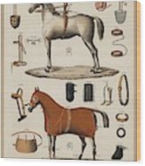 A Chromolithograph Of Horses With Antique Horseback Riding Equipments   1890  Wood Print