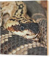 A Close Up Of A Mojave Rattlesnake Wood Print