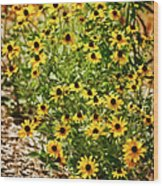 A Group Of Bossoming Black-eyed Susans Wood Print