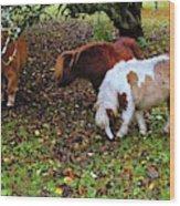A Herd In 15 Feet Wood Print