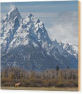 A Horse In Front Of The Grand Teton Wood Print