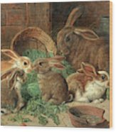 A Mother Rabbit And Her Young Wood Print