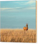 A Mule Deer Buck Stands In A Tall Bed Wood Print