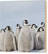 A Nursery Group Of Emperor Penguin Wood Print