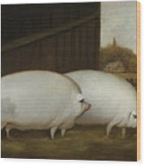 A Pair Of Pigs Wood Print