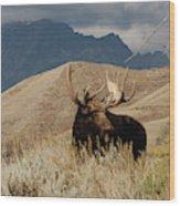 A Really Big Moose Wood Print